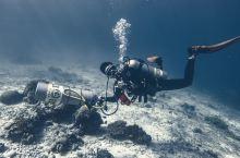 关于海洋生物的写真
