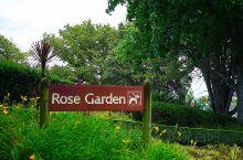 汉密尔顿湖边的玫瑰花园,人不多,景色优美。