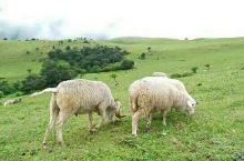 冕宁优美农场地