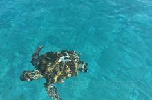 出海找海龟罗