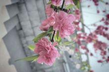 这是我4月份去的金匮公园,那时候正是樱花盛开的季节,特别没,因为是一个人去的,所以随便拍了几张,我是