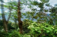 亚热带雨林气候造成中午去的路面都是湿漉漉的。最要命的事四公里的乡道,太难了。