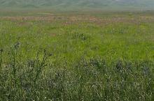 四川阿坝若尔盖,风景在路上