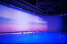 上海海昌海洋公园的海豚表演 画面太美