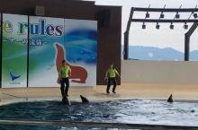 补上海响馆的海豚表演