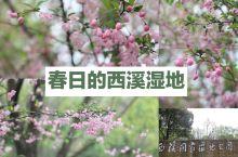 西溪湿地 人间四月天 ◤名称◢西溪湿地 ◤坐标◢杭州西溪 ◤门票◢无需门票,全天开放 ◤推荐理由◢春