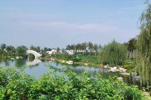亲们快来看看网红草哦!渭南植物园,水美!花美!风景美!地址:渭南环线贺家村附近!