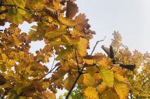 秋天逛公园 秋天怎么拍都能很美 固安中央公园现在弄的真不错了嘿 太适合小孩疯跑后好好吃饭睡觉哈哈 就