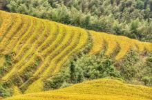 龙脊梯田之金坑梯田 龙脊梯田是主要有两个景区,一是金坑,一是平安。从龙脊梯田售票处进山10多公里,在