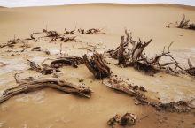 额济纳的沙漠 戈壁 骆驼 湿地 胡杨 怪柳 生命力顽强的沙漠生物 有它们独特的魅力 内蒙古最最最西边