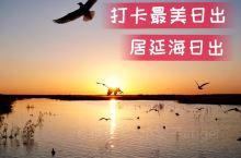 居延海日出  来额济纳旗,一定不要错过居延海的日出。旅行去过很多地方,也看过很多地方的日出,但这绝对