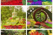 上海共青森了公园一年一度的菊花展