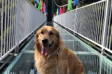 河源桂山景区可以带狗狗进,有玻璃栈道,还不错的小景点