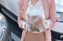 2018年10月3日 国庆四日游-宏村 带着半路从别人车底下救下的小猫逛逛宏村,逛完咪头也不回的跑了