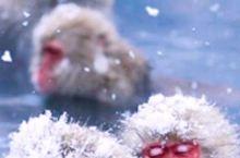 南山竹海芷岚秋精品民宿   御水温泉——江浙沪首选温泉圣地 芷岚秋民宿——溧阳最浪漫网红民宿 御水温