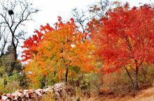 平邑丰阳镇香山红叶谷 看万山红遍,层林尽染。