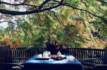 #莫干山风景区##住在老别墅里# 500年老枫树半红半绿,是秋日调得色。 坐树下偷得半日闲喝茶,成了