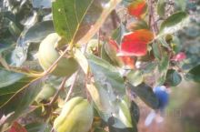 漂亮的果子。