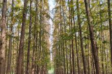 """园内森林繁茂、湖水澄碧、百鸟鸣唱、野趣浓郁,以""""幽、静、秀、野""""为特色。是回归大自然的最佳胜地之一。"""