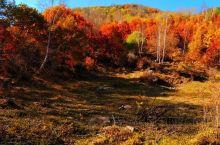 辽河源国家森林公园分为森林草原花海区、马孟山森林浴场仙居山庄度假区和辽代古墓区这三大景区,推荐九龙蟠