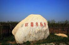 聚馆古贡枣园是中国现存最大最古老的古冬枣园,林内古冬枣树树体健壮,生长结果正常。