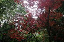 冬季的红与绿