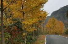 安陆银杏谷公园,每年的7-12月份最合适的季节