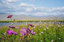 新疆可可托海,迷人秋色里的神秘圣地。新疆可可托海,位于地震断裂带上的额尔齐斯河大峡谷,河水一路向西,