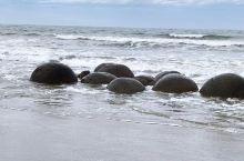 在去奧瑪魯镇途中车子停下来觀賞東海岸海灘上非常獨特的【毛利圓石】。
