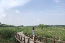 崇明湿地公园 拍照不管怎么拍都好美! P都不用P的  里面也很大 要是靠走路要走一整天