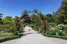 漂亮的玫瑰园