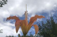 大九湖的花草与昆虫