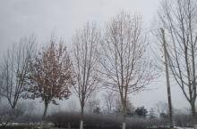 磁县回邯郸路上所见    雪后的树木批上素装,得知周围的几个村庄要被拆了,那就是合村并镇。以后路边不