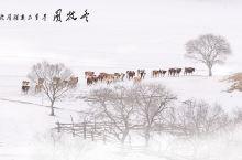 在新年伊始首次前往冬季的乌兰布统草原,白雪茫茫,覆盖起伏的山丘和草原,漂亮雾淞,冬季牧图,别有一番风
