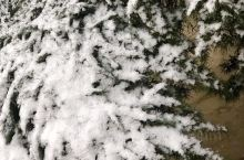 小雪降落扫去雾霾天气,净化空气质量。