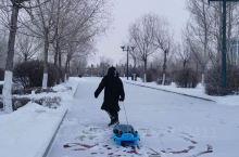 雪中释放的顽皮