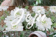 韩国拍照 济州岛的秘蜜花园,山茶花之丘  山茶花之丘是济州岛浪漫的景点之一,满园的山茶花,五颜六色。