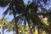 海滩沙子很细致,周围环境很安静,椰子树成排在道边挂差红色的灯笼,这份安静才是海滨休闲的正确打开方式吧