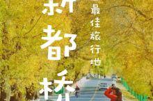 四小时抵达|秋日最佳旅行地   金秋十月,秋日最佳旅游胜地,都说这里是摄影天堂——【新都桥】  以下