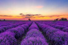 这里的天空是紫色的,大地是紫色的,植物是紫色的,似乎一切都是紫色的