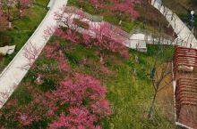 """阳春三月,风光无限,又进入了""""桃""""醉模式,庐州赏春好去处,那就是位于政务区与经开区交界的匡河,小桥、"""