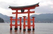 大鸟居跟奈良大佛的高度差不多有16米高,颜色为朱红色,重达60吨。主柱是由树龄长达500-600年的