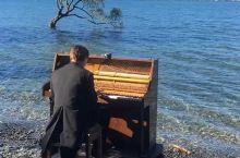 去年去新西兰,在瓦纳卡湖游玩时,遇到一青年身穿燕尾服,面对湖水弹琴。那真是一幅绝美的画面:清澈的湖水