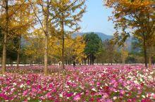 古银杏公园位于长兴县林城镇,很幽静的一个地方,由于位置相对偏僻些,所以来的人不多,里面有10多颗银杏