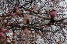 春暖花开疫情去,人勤景美幸福来!