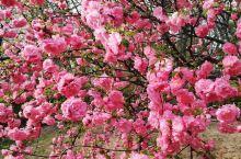 春暖花开好时节