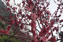 赶上桃花朵朵开