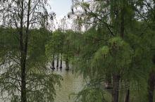 临安青山湖环湖绿道最有特色的是走在湖面上看屹立在水中的水杉。