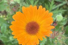 孩子喜欢拍花 特别漂亮的花 有空就带孩子透透气~~~