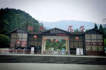 这里是近年来成都周围新晋的旅游景点!  她位于都江堰市虹口生态保护区,其最大看点是高山杜鹃——每年4
